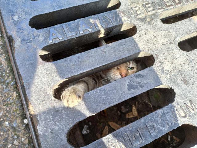 SON DAKİKA HABERLER: Mazgala sıkışan yavru kediyi itfaiye kurtardı