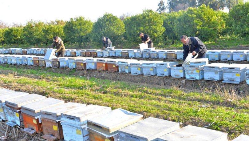 Bahar aylarında arı ölümleri artacak; uzmanından 'stok' uyarısı - Haberler
