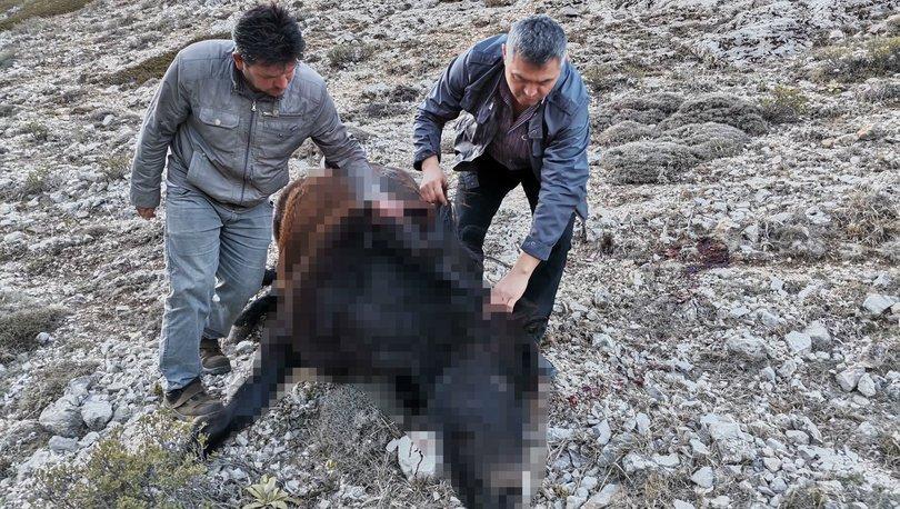 Biri gebe olan 2 yılkı atını vurdular! - Haberler