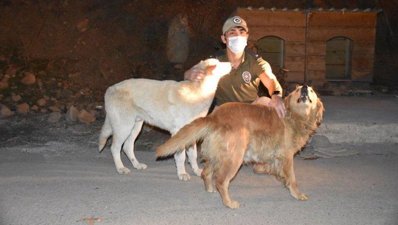Son dakika: Hakkari'de hayvanlar için özel polis ekibi