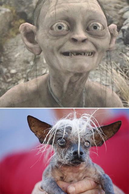 Yüzüklerin Efendisi karakterleri köpeklere benzetilirse...