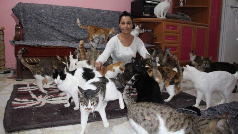 20 yıldır 'Kedi çobanı'... Dubleks villasını barınak yaptı