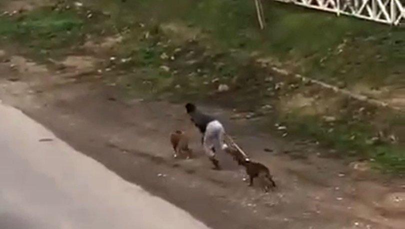 Korkunç görüntü! İki köpeğini sopayla dövdü - Haberler