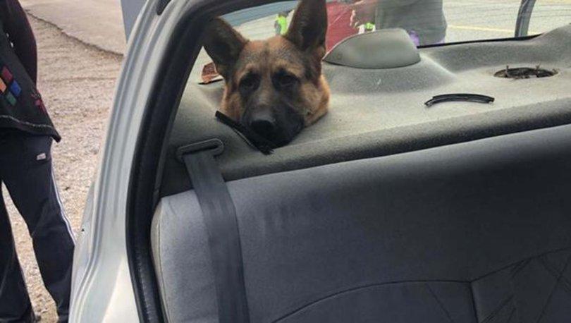 Bagajda taşınan köpeğin başı hoparlör boşluğuna sıkıştı - Haberler