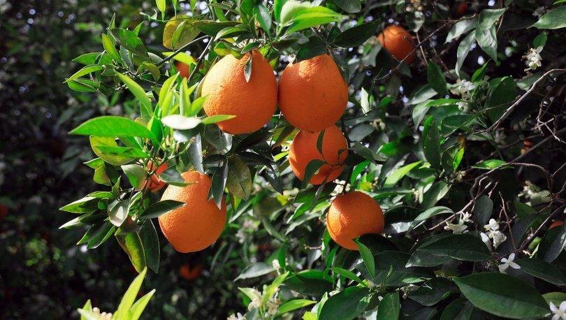 Portakal fiyatlarında 'dolu' artışı