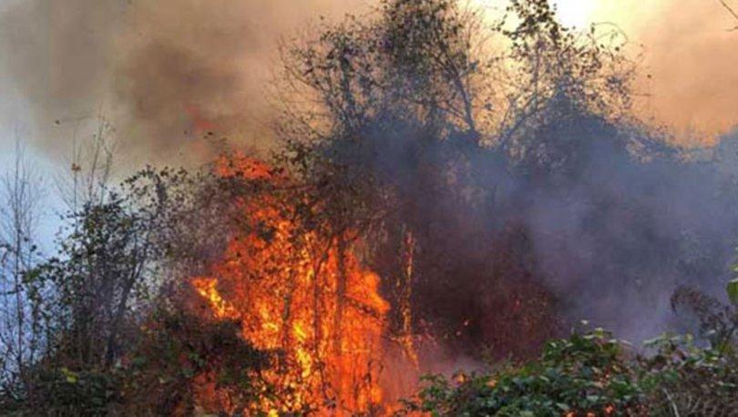 Doğu Karadeniz'de, 4 ilde, 23 noktada yangın; ekipler müdahale ediyor