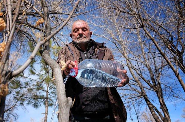 40 yılda yüzlerce fidan dikti, her gün suluyor