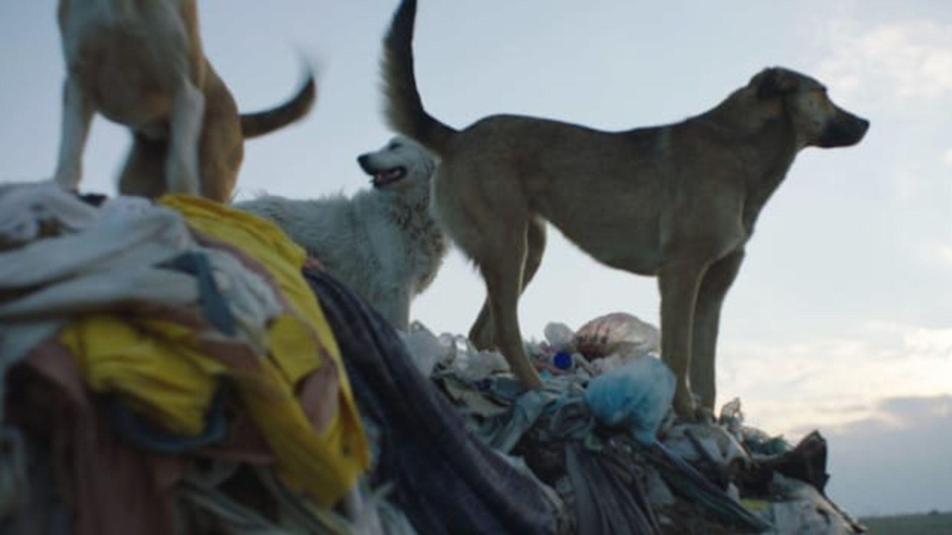 'Stray' belgeselinin fragmanı