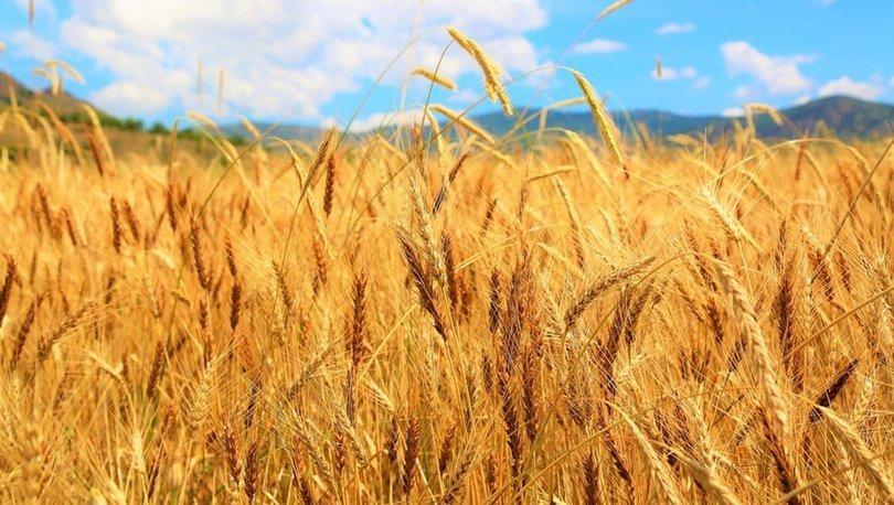 Rusya buğday ihracatına ek vergi getiriyor