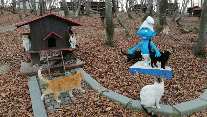 Sokak kedilerine 'Kedi Kasabası'