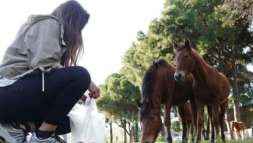 Atlar sokakları bastı! Son dakika: Yılkı atları ilçe merkezine indi