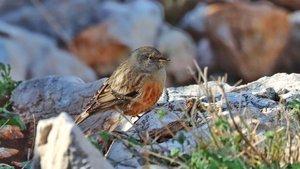 Hatay'ın 374. kuş türü olarak kayıtlara geçti