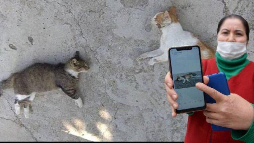 Hayvanseverleri ayağa kaldıran katliam!