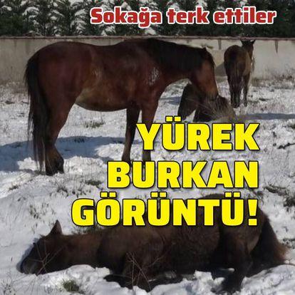 Sokağa terk edilen atlar yürek burktu