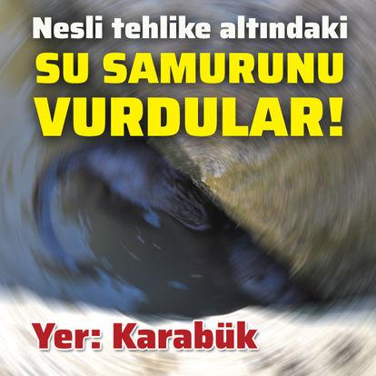 Nesli tehlike altındaki su samurunu vurdular!