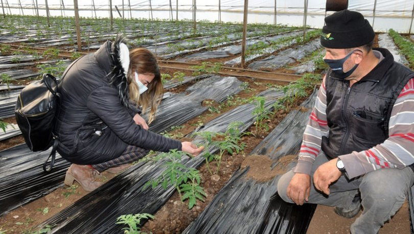 Antalya ve Muğla'da çiftçiler zirai don nöbetinde