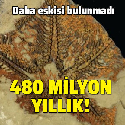 Daha eskisi bulunmadı... 480 milyon yıllık!