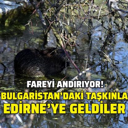 Fareyi andırıyor... Bulgaristan'daki taşkınla Edirne'ye geldiler