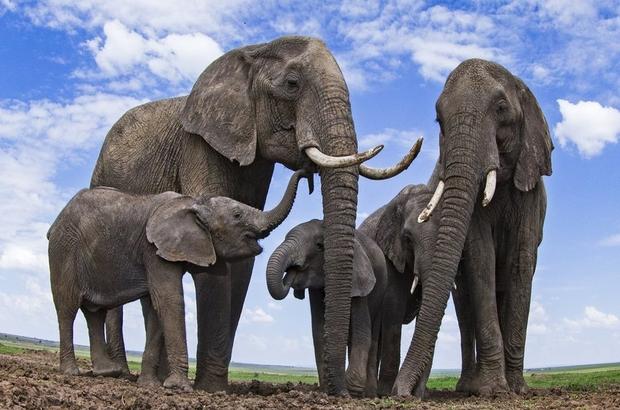Filleri uzaydan sayabilen teknoloji geliştirildi