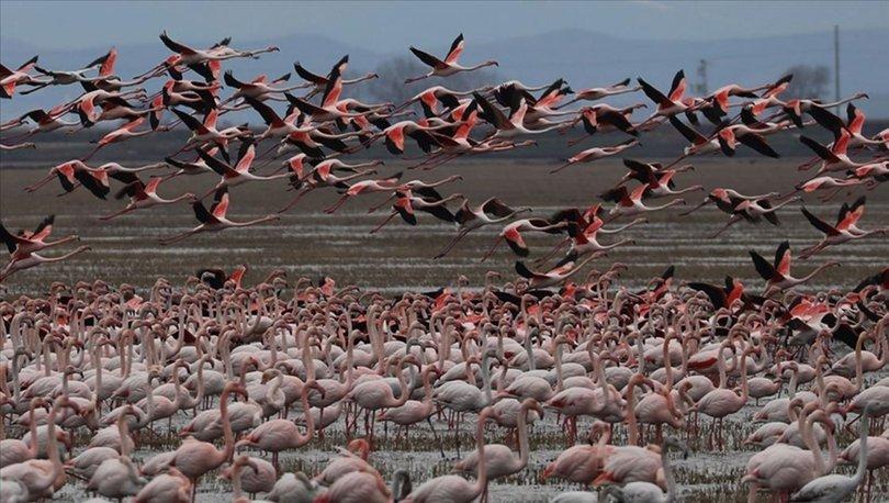 Gala Gölü'nün 'pembe tüylü misafirleri'