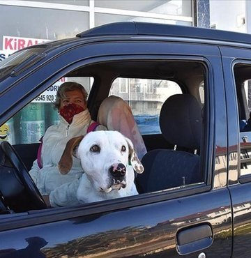 Sokakta buldukları köpeğe araçlarını tahsis ettiler