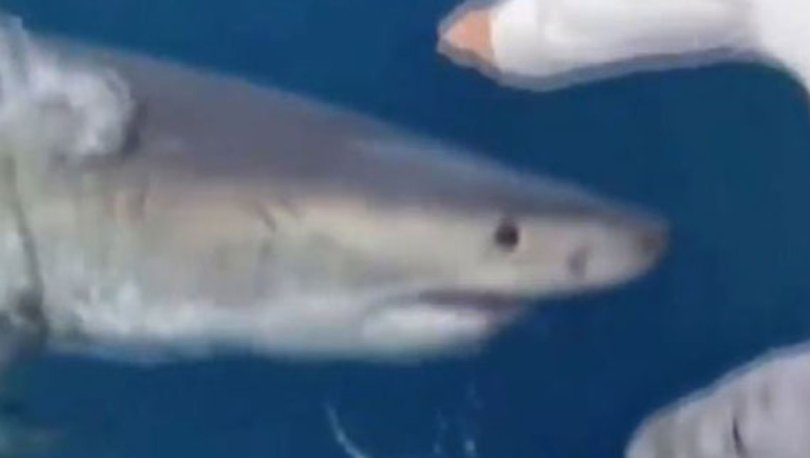 Dev köpekbalığı balık tutanlara böyle saldırdı