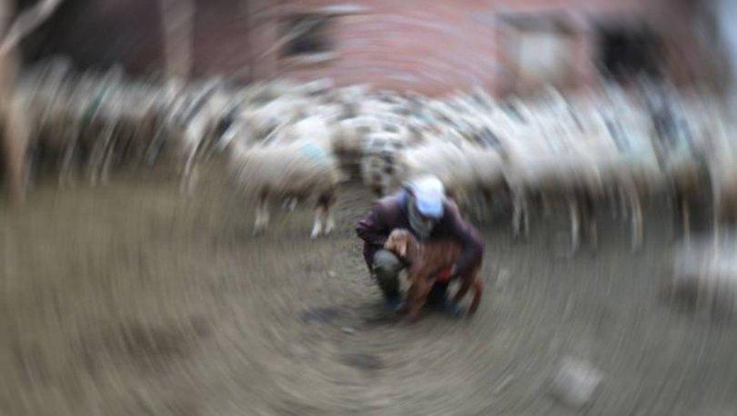 Afgan çobanların kavgası kanlı bitti
