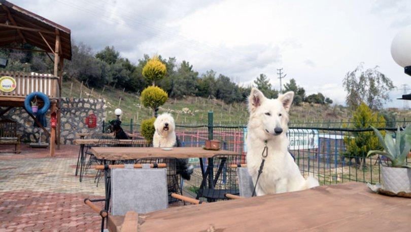 Bu kafenin müşterileri köpekler