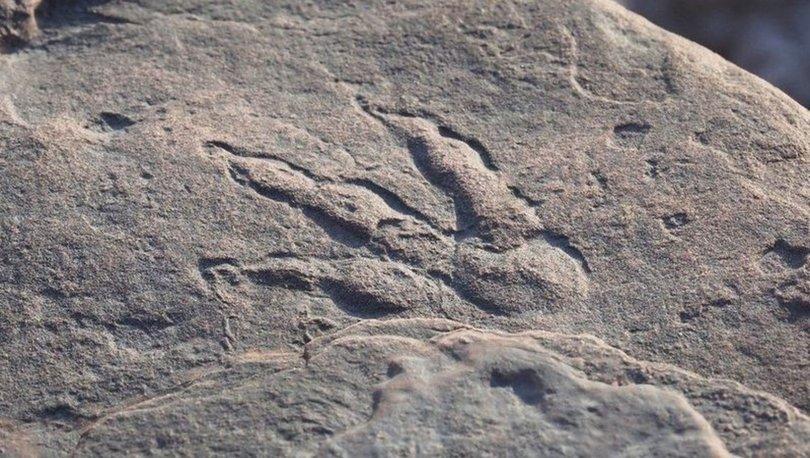 4 yaşındaki çocuk plajda buldu... 220 milyon yıllık! - Haberler