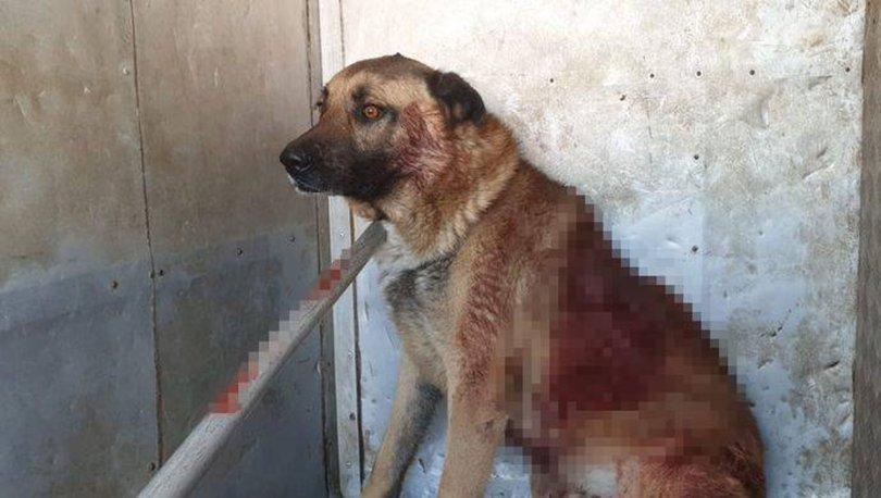 MAGANDA  Son dakika: Köpeği vuran caninin pişkinliği 'pes' dedirtti
