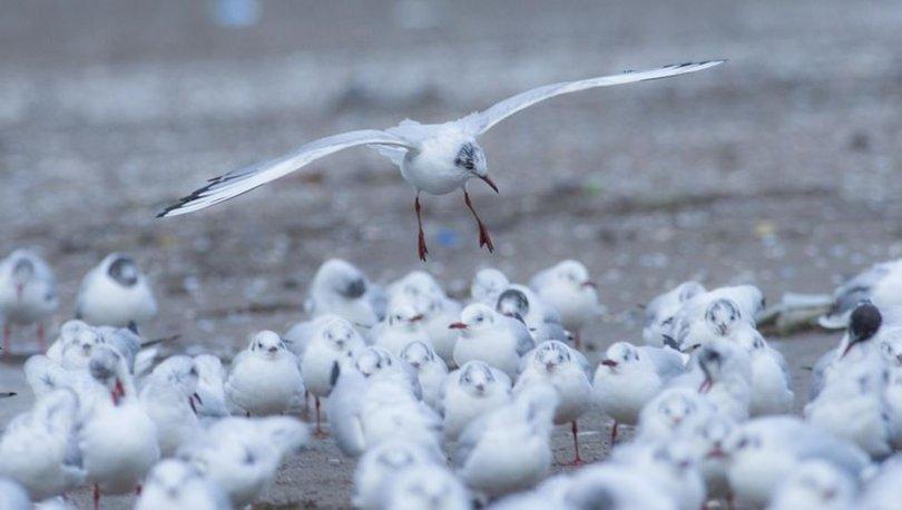 Kar fırtınasında kalan kuş türleri fotoğraflandı