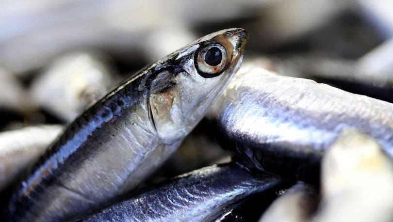 Doğu Karadeniz'in su ürünleri ihracatı yüzde 176 arttı