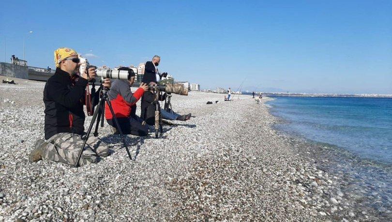 TARAKDİŞ| Son dakika: Doğa harikaları sahile akın etti