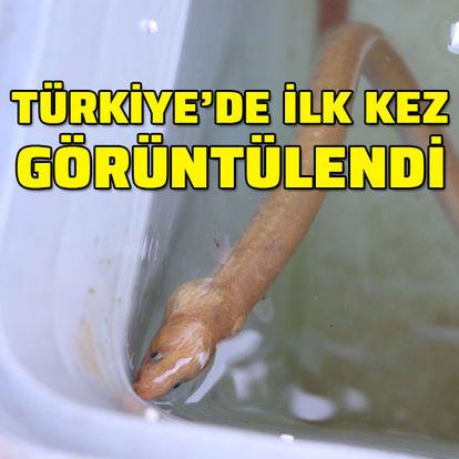 Türkiye'de ilk kez görüntülendi