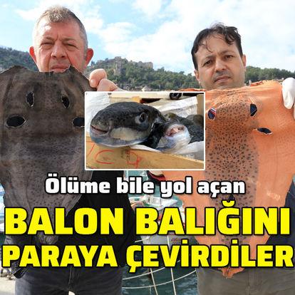 Ölüme bile yol açan balon balığını paraya çevirdiler!