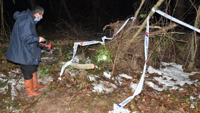 Sinop'ta Kıbrıs gazisi kestiği ağacın altında kalarak öldü
