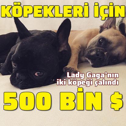 Afrika açlıktan kırılıyor! Son dakika: Lady Gaga köpekleri için 500 bin dolar ödül koydu!