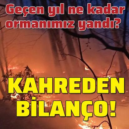 İşte yanan ormanlarımızın bilançosu!
