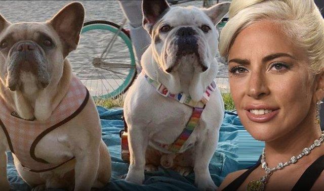 Lady Gaga'nın köpekleriyle ilgili flaş gelişme! - Magazin haberleri