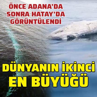 Önce Adana'da sonra Hatay'da görüntülendi