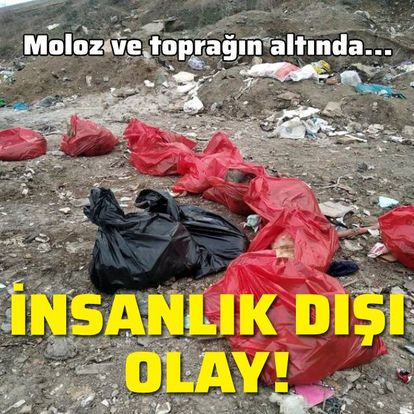 Ankara'da insanlık dışı olay!