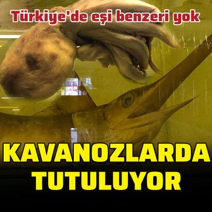 Türkiye'de eşi benzeri yok... Kavanozlarda tutuluyor!