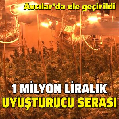 Avcılar'da 1 milyon liralık uyuşturucu serası!