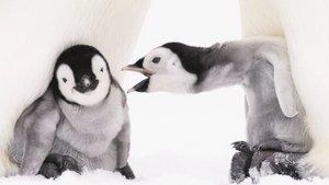 10 bin penguen ile birlikte yaşayıp, onları fotoğrafladı