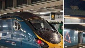 Hızlı trenin üzerinde fark edilen kedi, 2.5 saatte indirildi