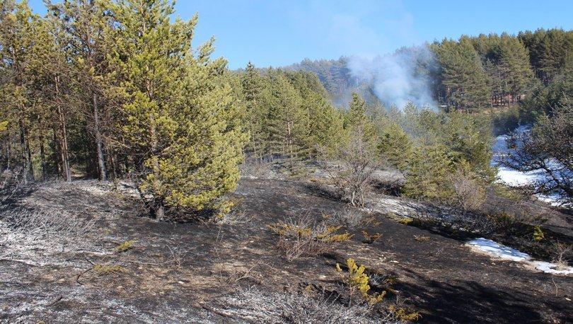 Kastamonu'da orman yangını! 60 arı kovanı yandı - Haberler
