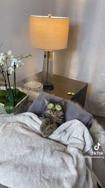 Son dakika: Kedinin spa günü 60 milyondan fazla izlenme aldı - Haberler