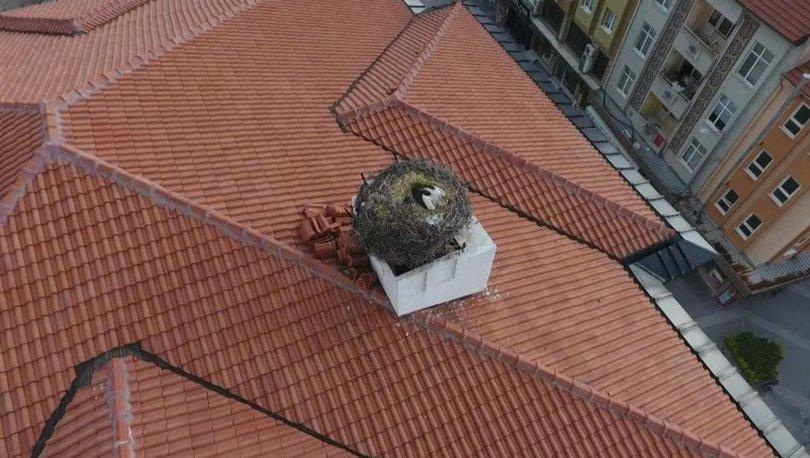 Sındırgı'nın sembolü Sağdıç leylek belediye binasının çatısındaki yuvasına yerleşti