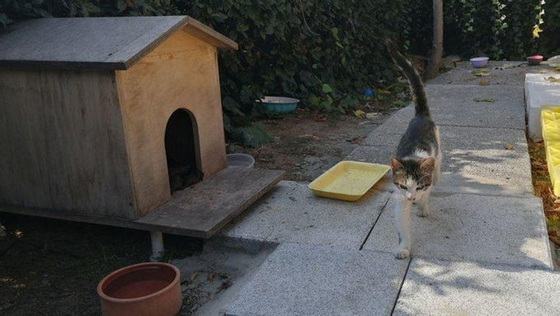 Site içinde bıçakla tehdit! SON DAKİKA: Kedi kavgasında emsal karar