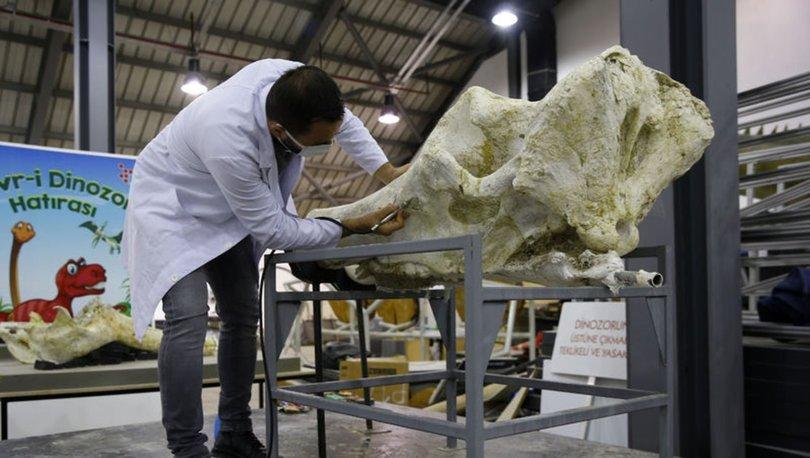 Kayseri'de 8 milyon yıl önce 5 farklı fil türü bir arada yaşamış